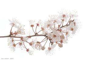 fiorisusinopiccolo