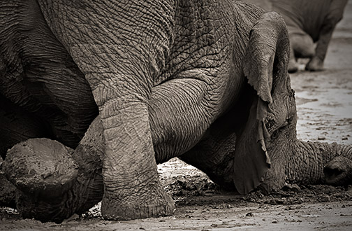 Shooting an Elephant (Orwell)?